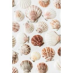 Миди с розово - червени краски  - flat scalop shell - 3-5см - 10бр.