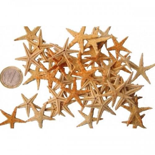 Морски звезди - около 4см, опаковка от 50бр.