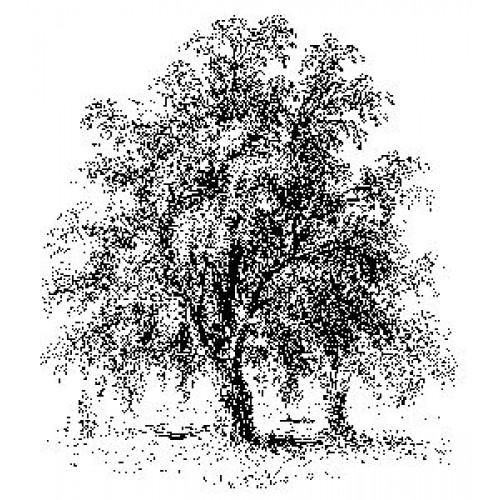 Гумен печат на дървено блокче - Art Stamps - BP The Acacia