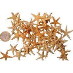Морски звезди - около 3см, опаковка от 50бр.