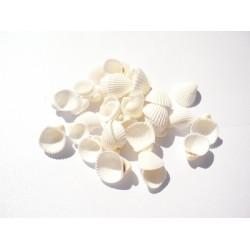 Бели мидички - rose clam - 1 - 2,5 см - 35бр.