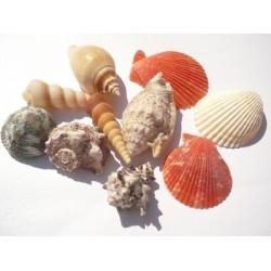 Микс от морски елементи / голямо разнообразие от рапани, миди, раковини и охлювчета - mixed shells - 10бр.