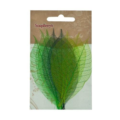 Скелетирани листа -  микс от 3 цвята зелено - 8 бр. - Skeleton leaves, set of 8 - 2 color mixed, Rubber Tree, greens
